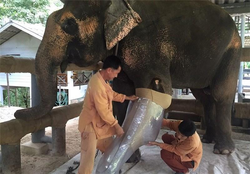 ساخت پای مصنوعی برای فیل معلول در تایلند