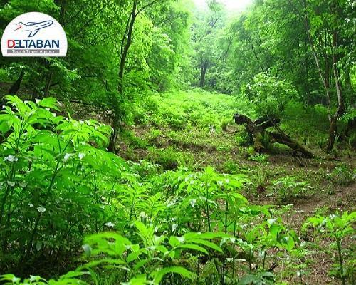 پوشش گیاهی و جانوری جنگل گلستان