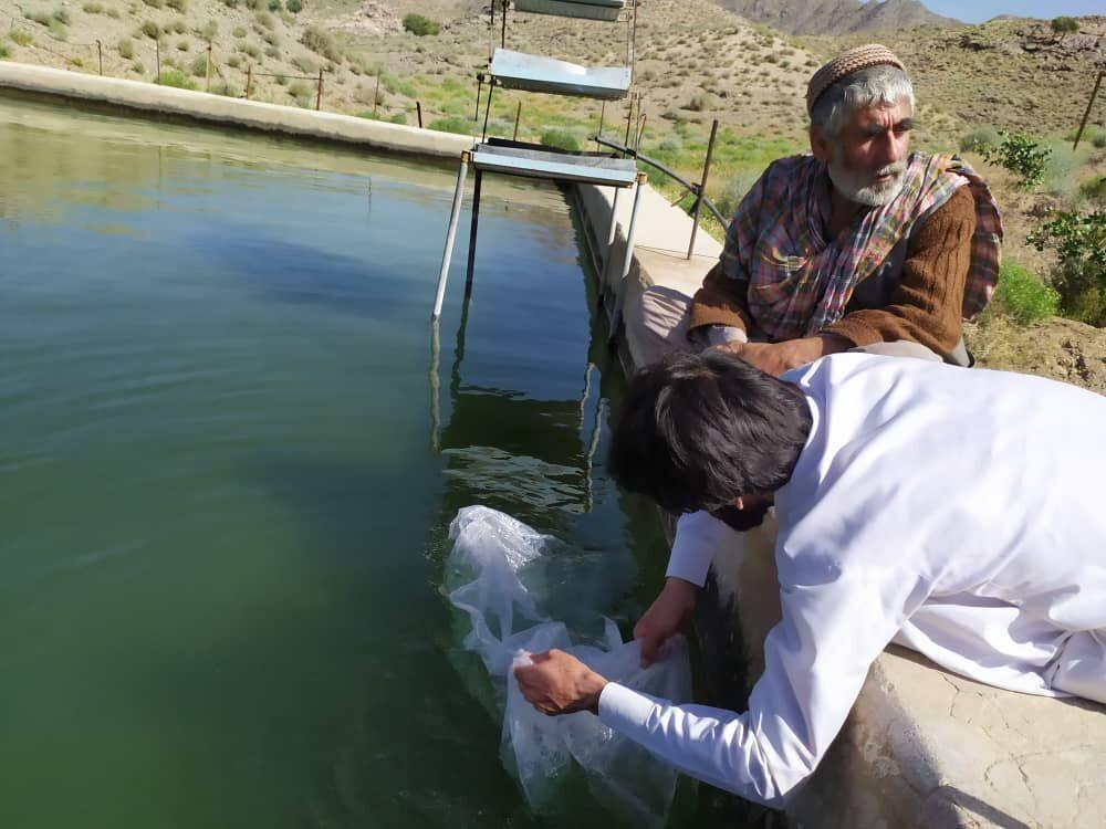 خبرنگاران بیش از یک میلیون و 700 هزار لارو ماهی در ایرانشهر رها سازی شد