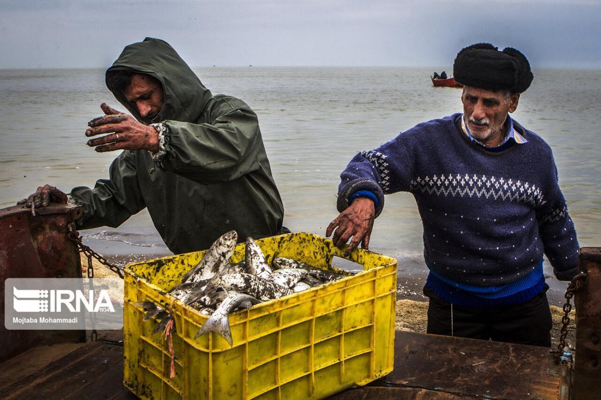 خبرنگاران خرید حمایتی محصولات پرورش ماهی در دریا
