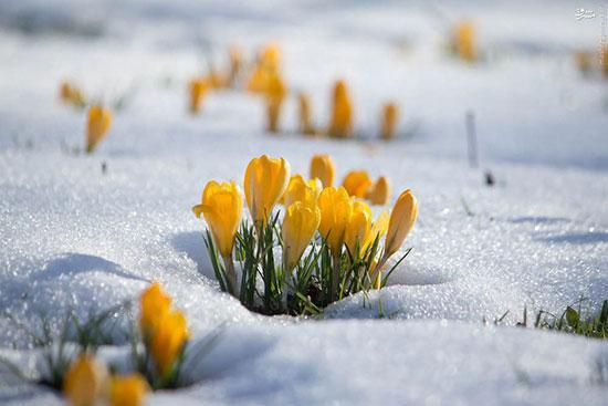 چگونه می توان گیاهان را از یخ زدگی نجات داد؟