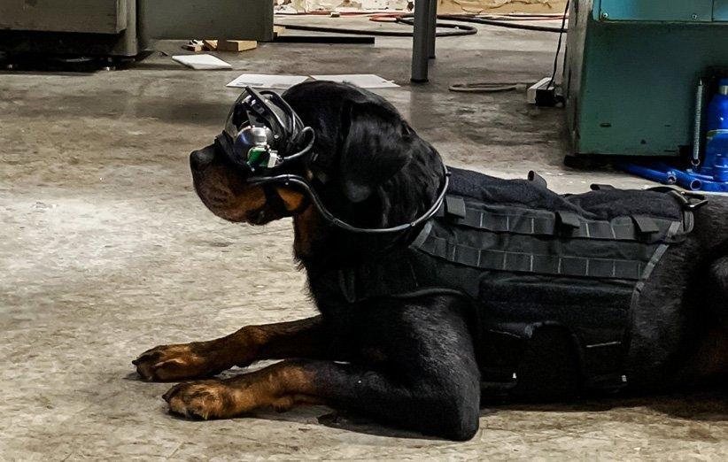 ارتش آمریکا برای هدایت سگ ها از عینک واقعیت افزوده استفاده خواهد کرد